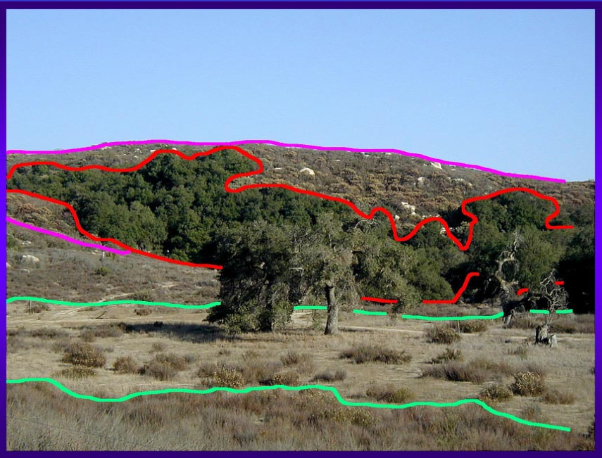 California_vegetation